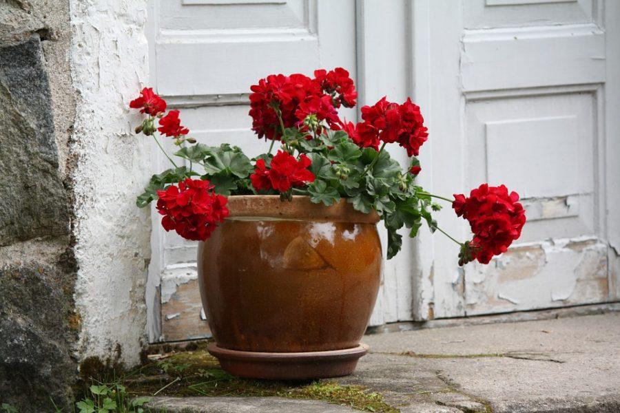 Beautiful+Red+Magic