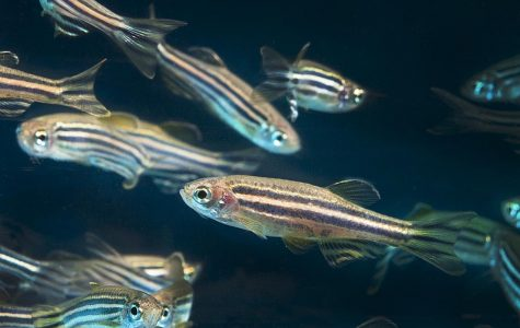 Are Fish Replacing Rodents?