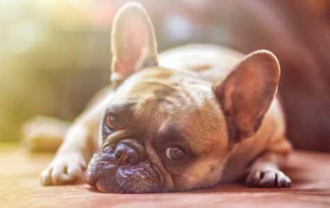 5 Foods That are Killing Your Dog